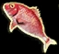 red_snapper